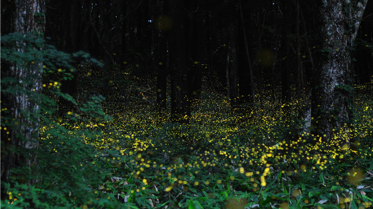 These long exposures of fireflies are nuts!